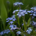 Blue Flower by BrokenMix