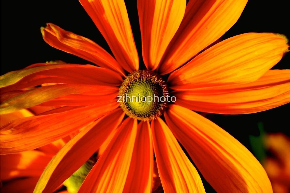 Orange flower by zihniophoto