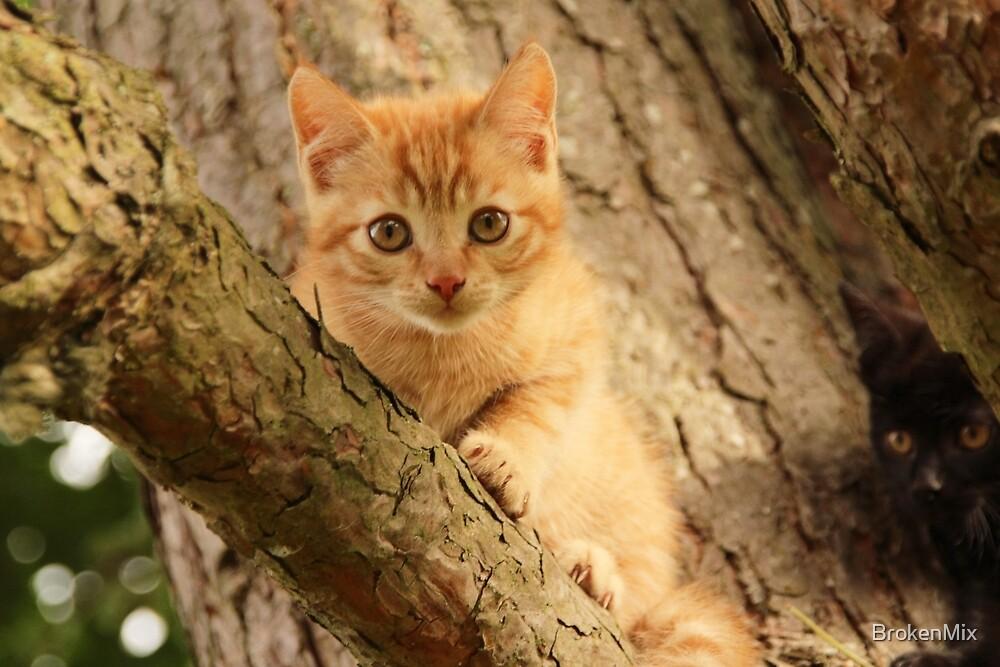 Mini cat by BrokenMix