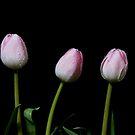 Three by Lynne Morris
