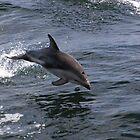 Peale's Delfin Schweinswurf von Carole-Anne