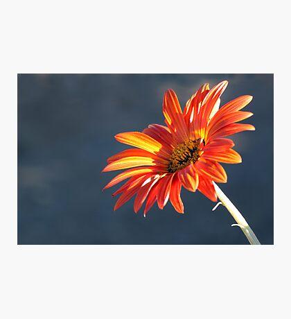 Sunkissed Orange Photographic Print