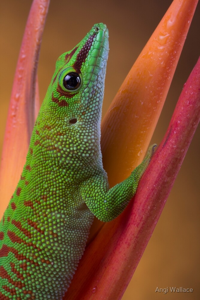 Day gecko close up by Angi Wallace