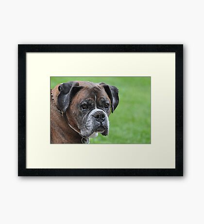 Tyson at 10 Framed Print