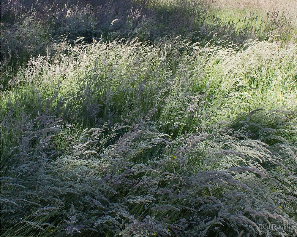 Meadow grass - concedes to breeze by Rod Raglin