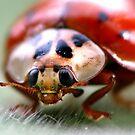 ladybird by Bibi03