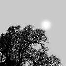 Pale Winter Sun by friendlydragon
