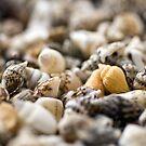 Seashells by friendlydragon