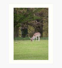 Deer at Dunham 1.5.10  - Eos 20D 85 - 300 lens Art Print