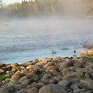Mississippi river Duck Duck dawn by NiftyGaloot