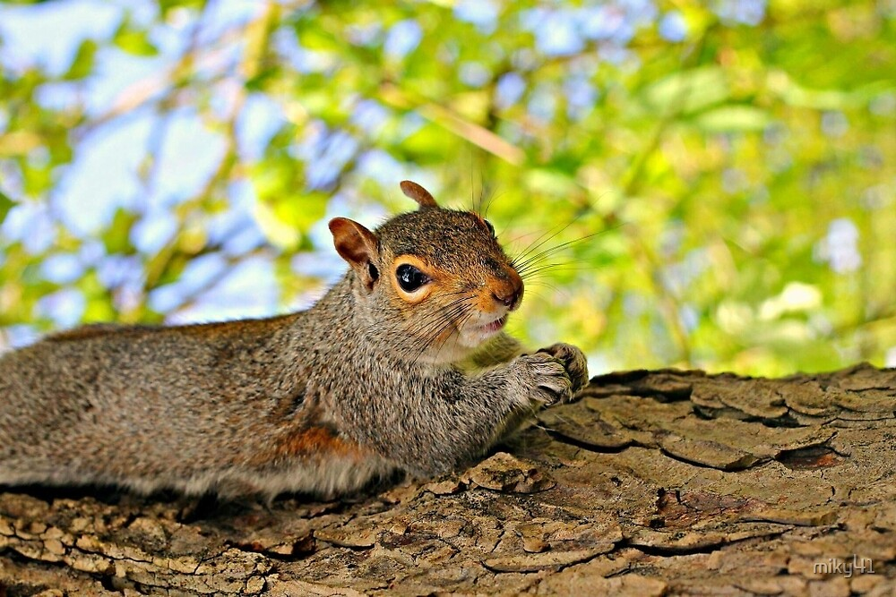 chilling squirrel  by miky41