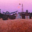 Woodstock Brolga by Cary McAulay