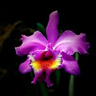 ~Raymond's Orchid~ by a~m .