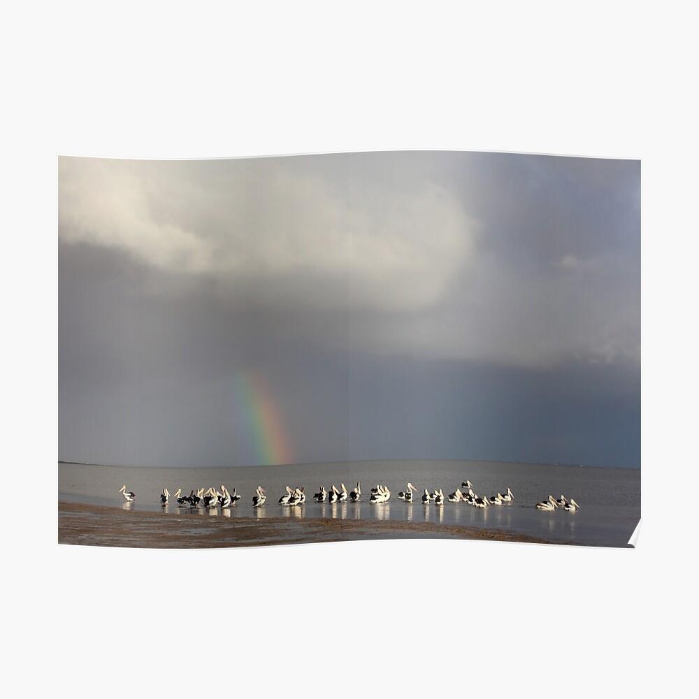 Lake Albert Pelicans, Meningie, South Australia Poster