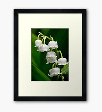 Lily of the Valley (Convallaria majalis) Framed Print