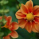 Softly softly by Catherine Davis