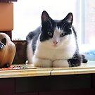 Copy Cat by cuprum