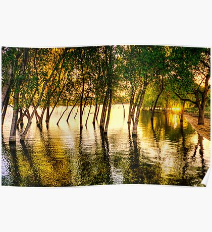 Tree Flood Poster