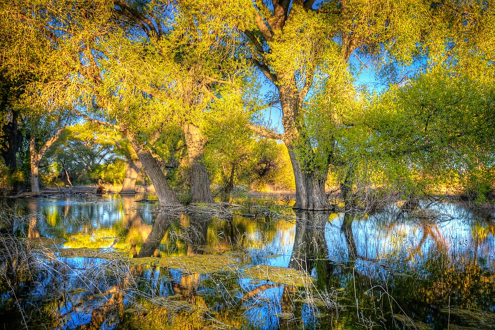 Swamp Mirror by Bob Larson