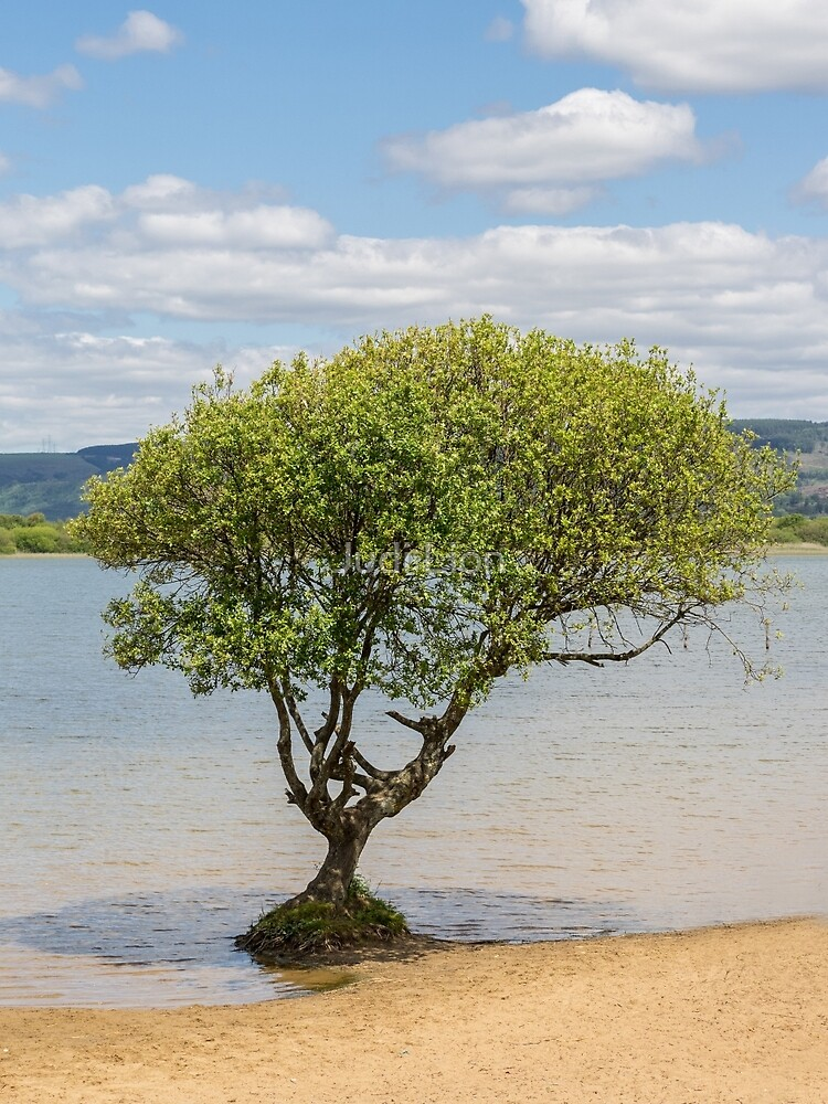 Tree by the lake by Judi Lion