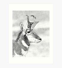 Mono Antelope Buck Art Print