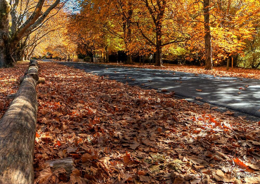 Mount Wilson The Glorious Colours of Autumn II NSW Australia by DavidIori