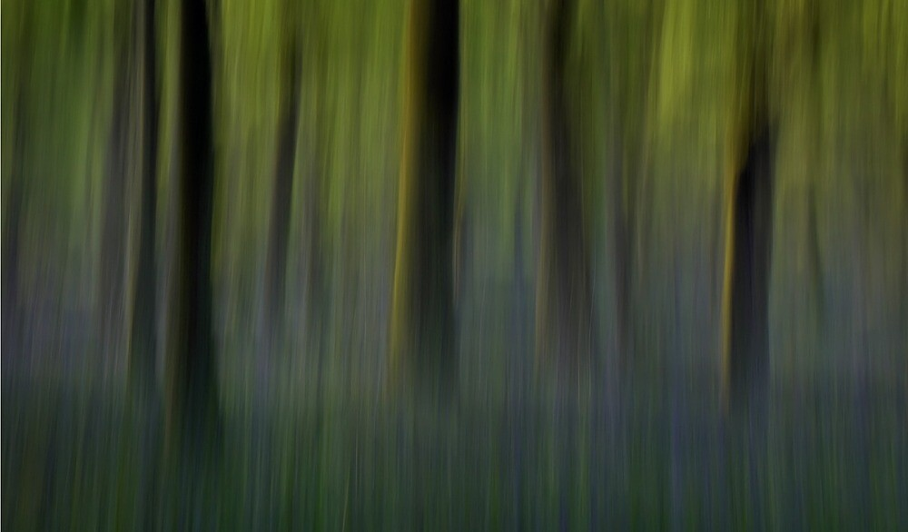 bluebell forest by UndaJ