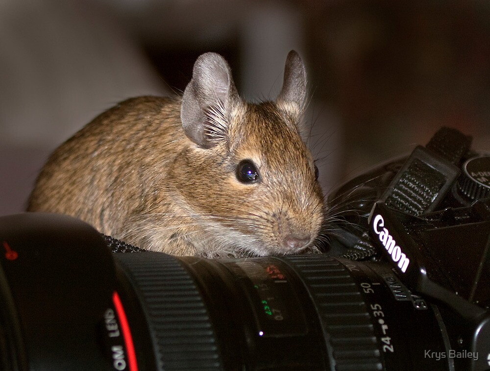 The Photographer by Krys Bailey