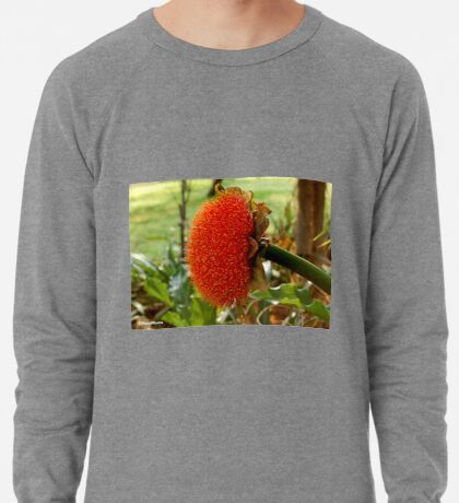 SCADOXUS puniceus – Blood Lily – Rooikwas Lightweight Sweatshirt