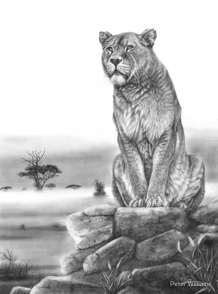 Sentinel - Löwinzeichnung von Peter Williams