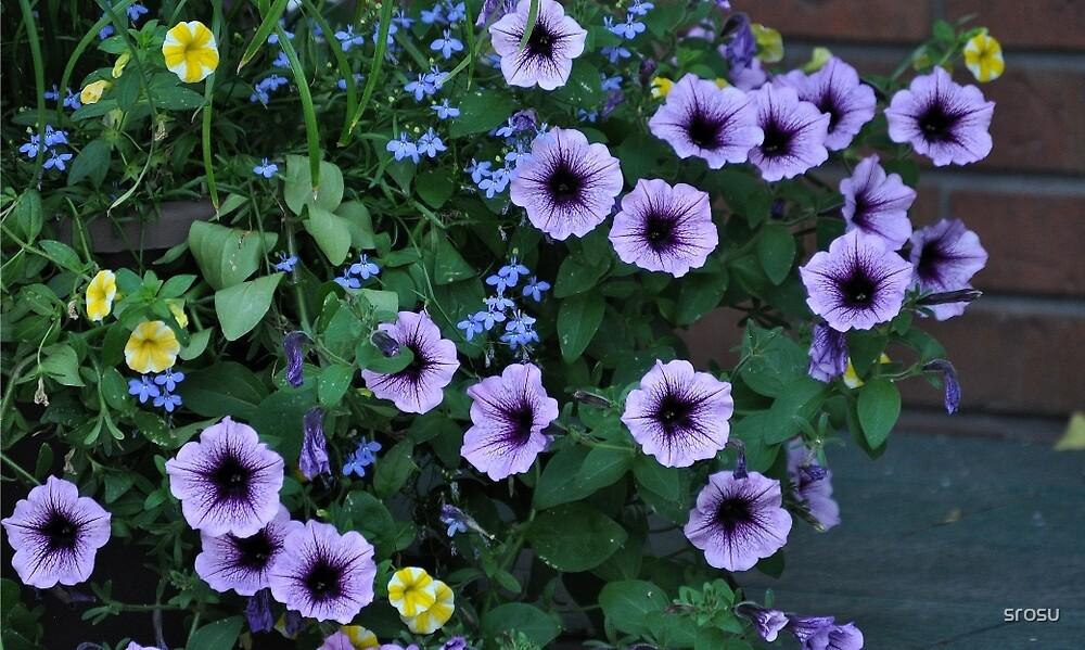 Purple Petunia Glory by srosu