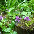 Devon Violets After the Rain by Leyh