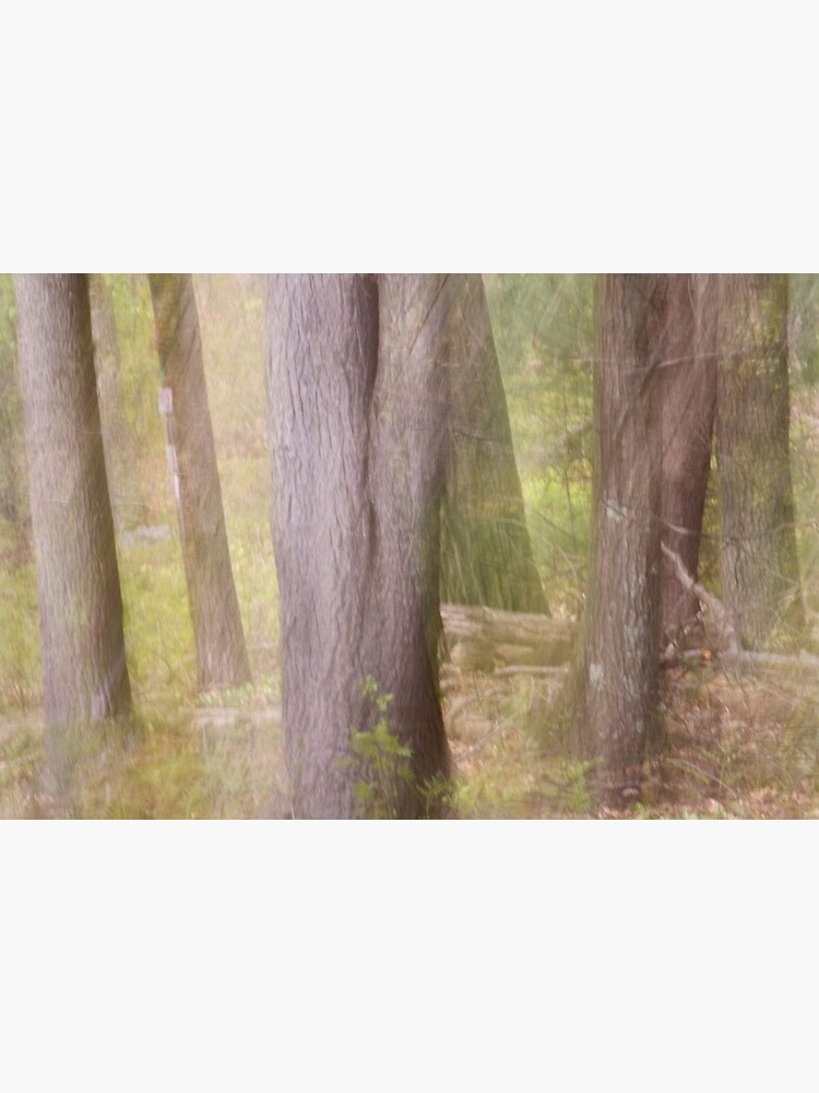 Ghostly Spring Forest by LynnWiles
