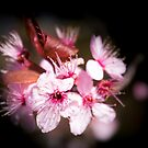 Blossom by JEZ22