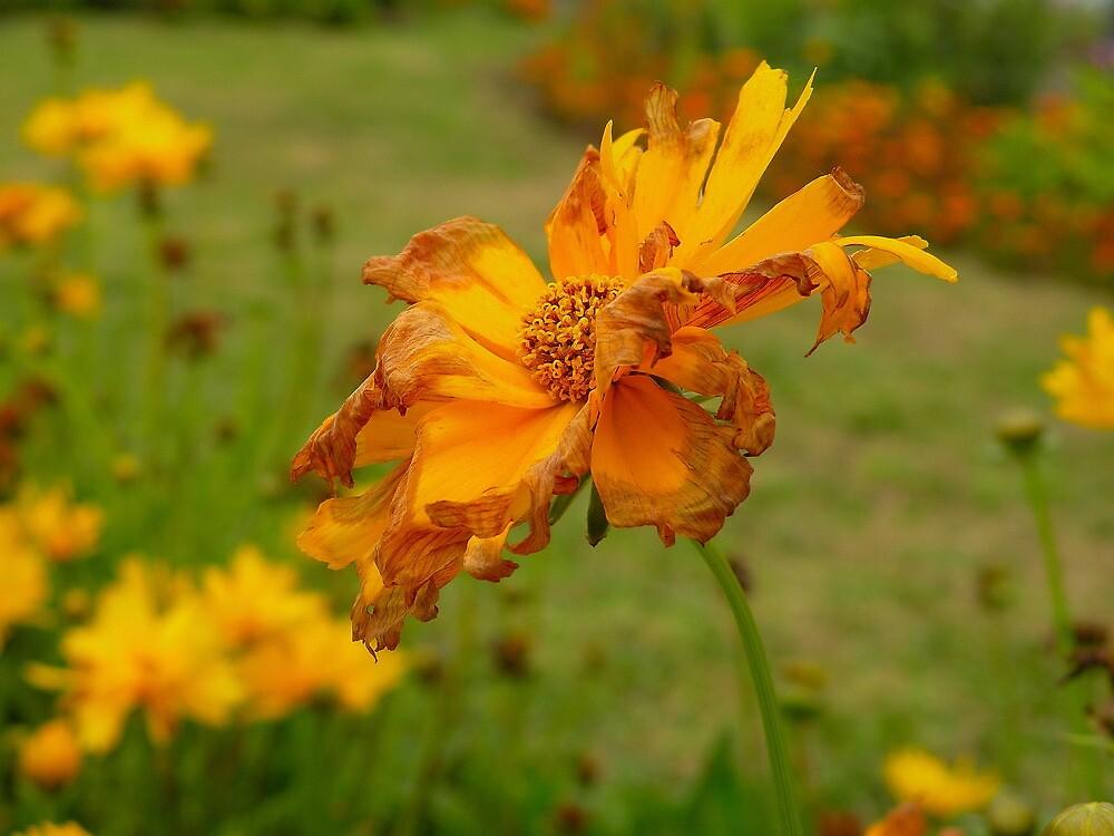 El espíritu de una flor............. by cieloverde