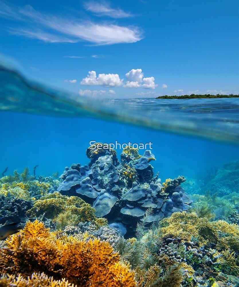 Over-under split view coral reef underwater by Dam - www.seaphotoart.com