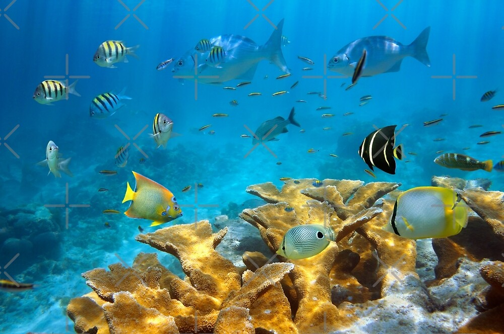 Reef with fish and Elkhorn coral by Dam - www.seaphotoart.com