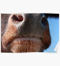 Whose Nose Poster