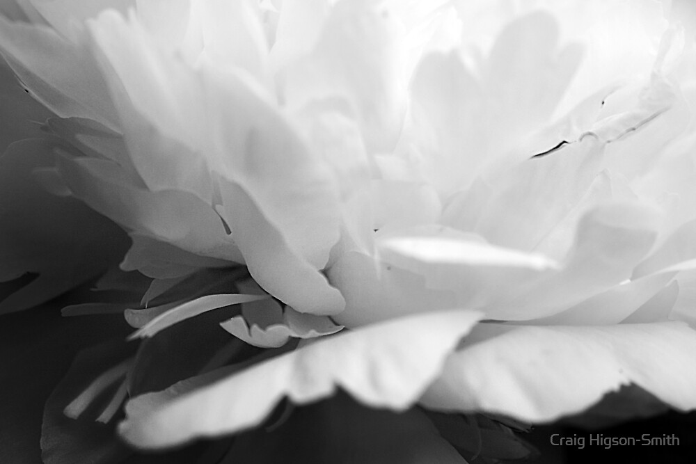 Secret Peony by Craig Higson-Smith