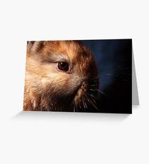 Baby Bunny I Greeting Card