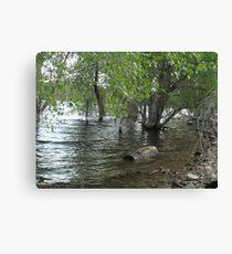 Floating Log- Willow Lake Canvas Print