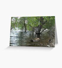 Floating Log- Willow Lake Greeting Card