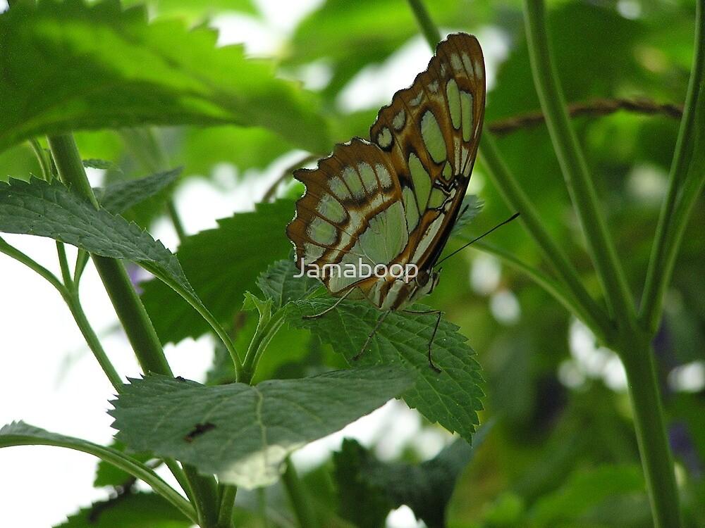Green butterfly by Jamaboop