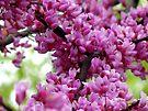 Redbud Branch by MarjorieB