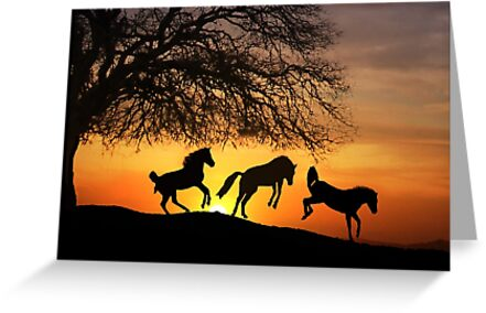 Jump for Joy Horses in the Sunrise by Stephanie Laird