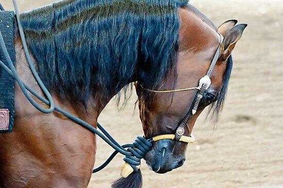 Arabian Show Horse by bengraham