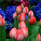Spring and Tulips by Eros Fiacconi (Sooboy)