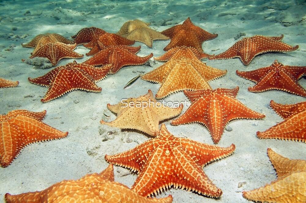 Sea stars on sandy ocean floor by Dam - www.seaphotoart.com