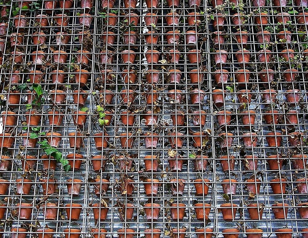 Restaurant Wall in Perth by lezvee