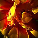 Golden Tulip. by Vitta